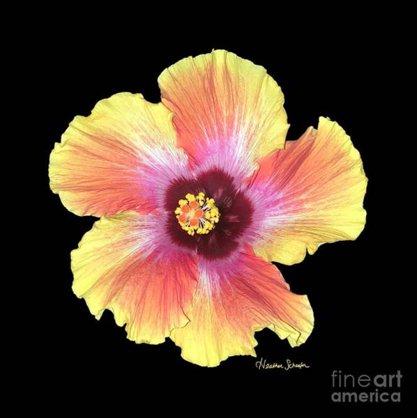 Photograph - Hibiscus by Heather Schaefer