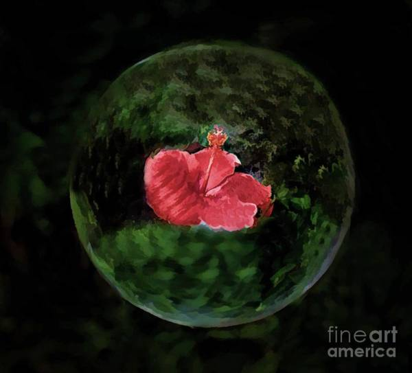 Wall Art - Photograph - Hibiscus In A Bubble by Arnie Goldstein