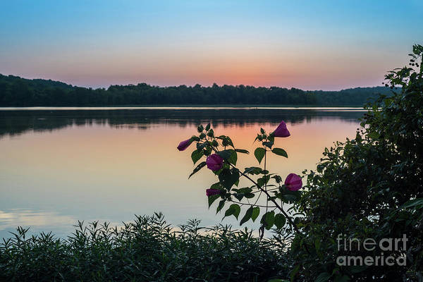 Wall Art - Photograph - Hibiscus Morning by Jennifer White