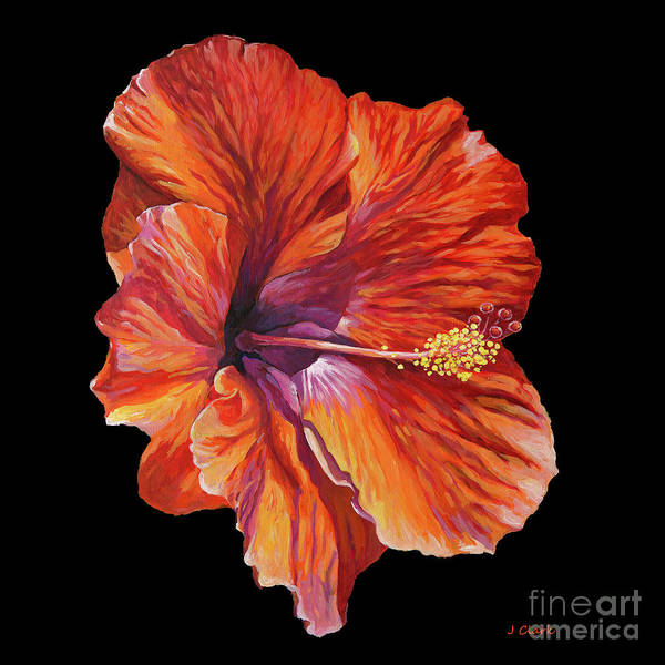 Wall Art - Painting - Hibiscus On Black Square by John Clark
