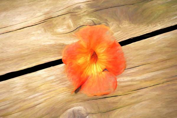 Photograph - Hibiscus On Wood by Karen Silvestri
