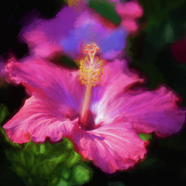 Photograph - Hibiscus Painted Lady 101 by Rich Franco