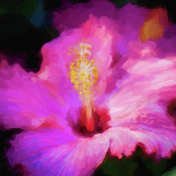 Photograph - Hibiscus Painted Lady 105 by Rich Franco
