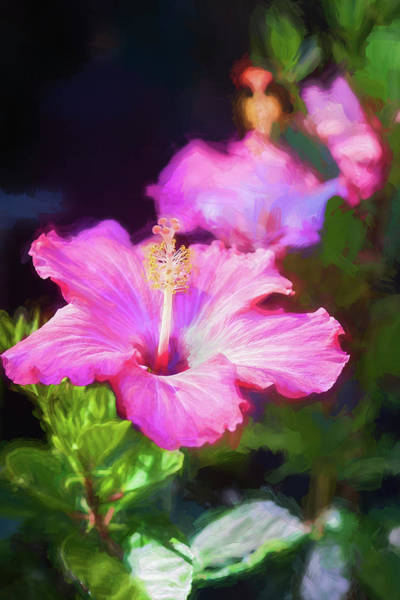 Photograph - Hibiscus Painted Lady 116 by Rich Franco