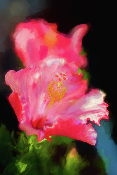 Photograph - Hibiscus Painted Lady 120 by Rich Franco