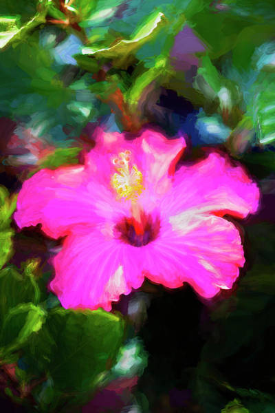 Photograph - Hibiscus Painted Lady 123 by Rich Franco
