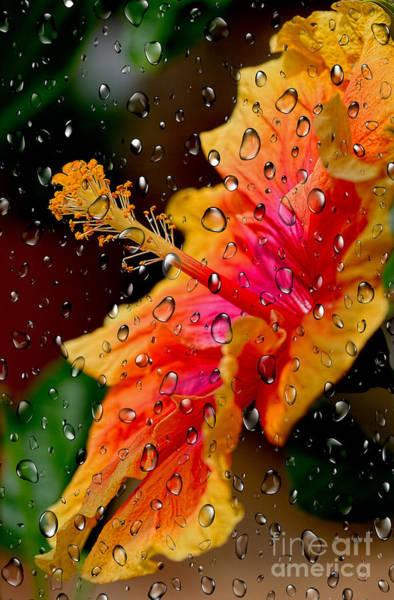 Wall Art - Photograph - Hibiscus Through Raindrops By Kaye Menner by Kaye Menner