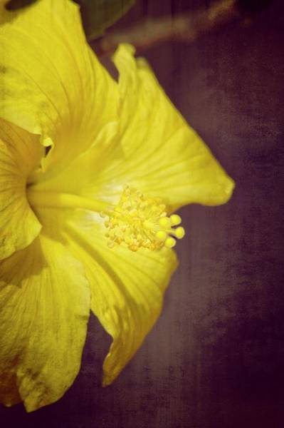 Photograph - Hibiscus Yellow by Carolyn Marshall