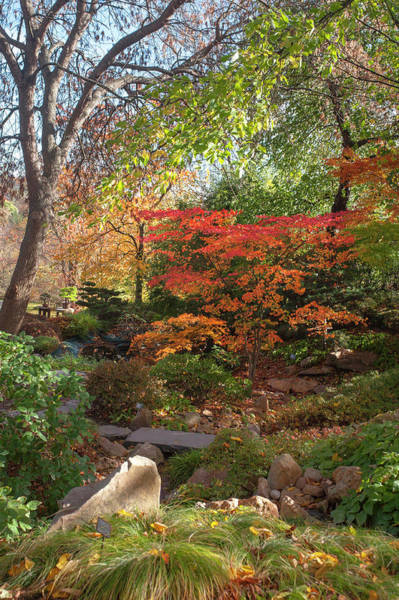 Photograph - Hidden Corner Of Japanese Garden by Jenny Rainbow