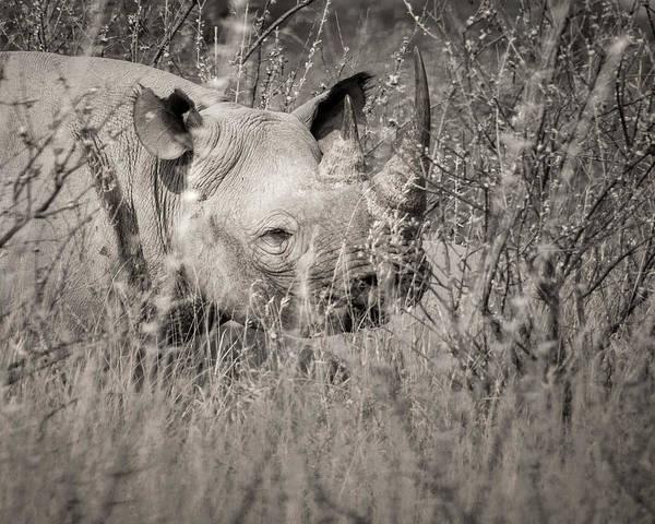 Photograph - Hidden by Dalibor Hanzal