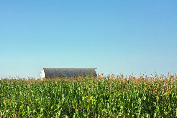 Corn Field Photograph - Hidden From View by Todd Klassy