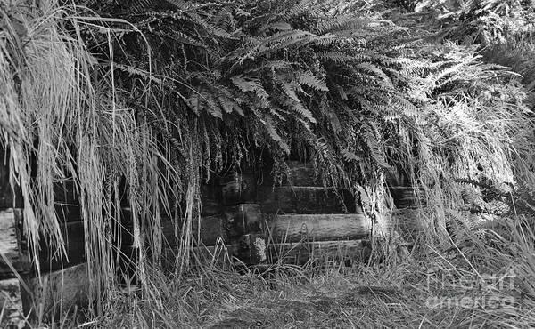 Photograph - Hidden  by Jeni Gray