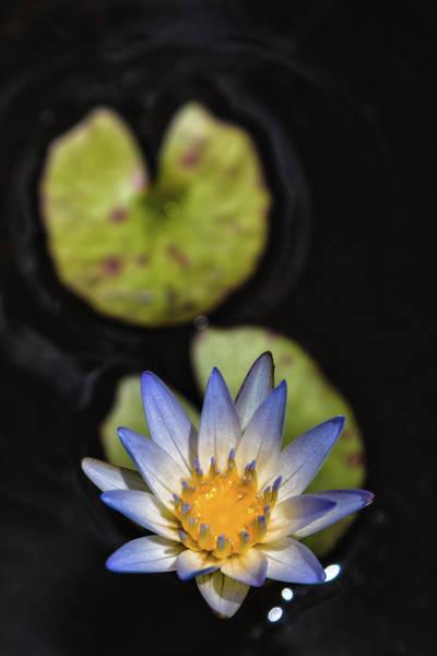 Photograph - Hidden Jewel by Laura Roberts