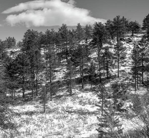 Photograph - Hidden Trail by Dan Urban