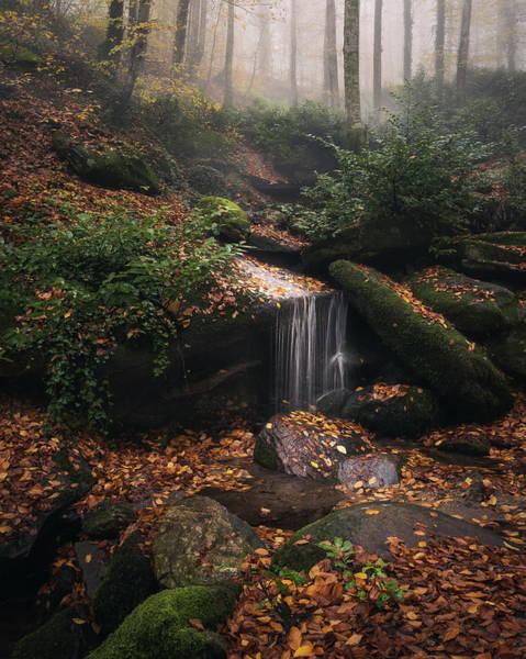 Photograph - Hidden Treasures by Suleyman Derekoy