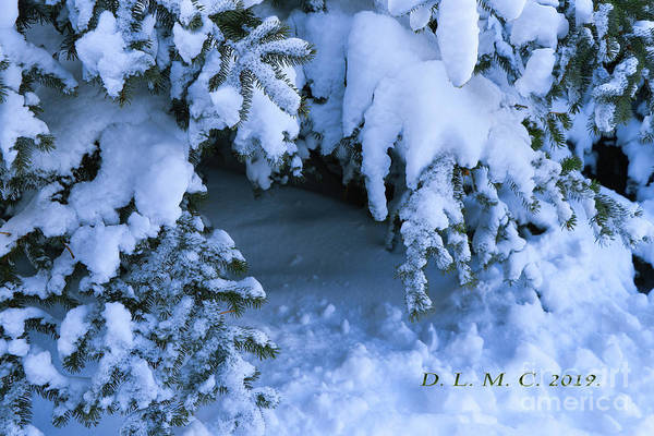 Photograph - Hideaway Tree by Donna L Munro