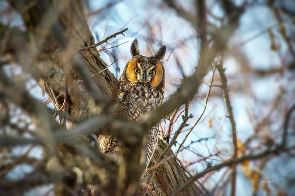 Photograph - Hiding 2 by Leland D Howard