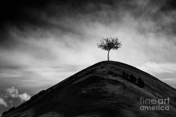 Lone Tree Wall Art - Photograph - High As Hope by Evelina Kremsdorf