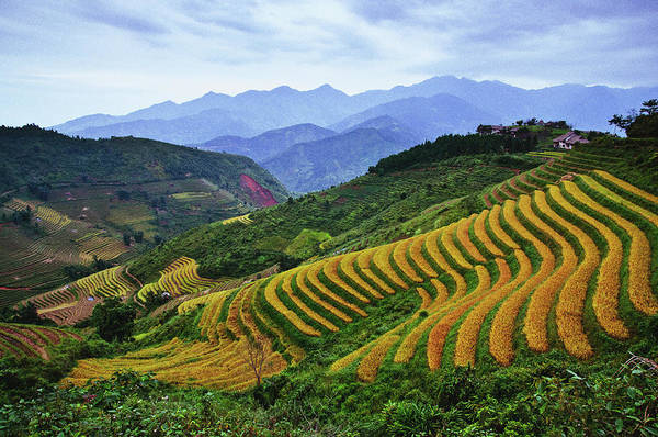 Laos Photograph - High Country Rice Terraces by Flash Parker