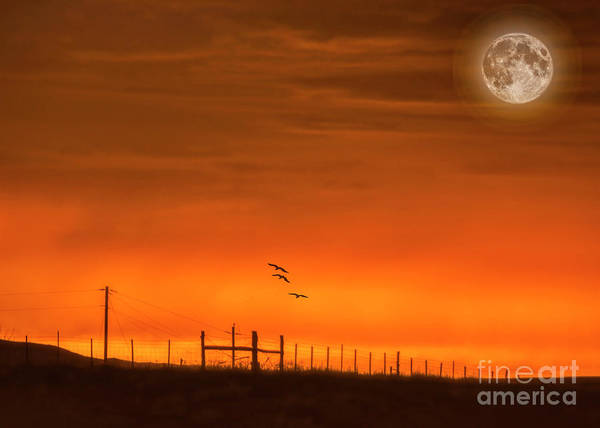 Photograph - High Desert Moonlight Sonata by Janice Pariza
