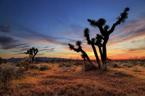 Photograph - High Desert Sunset by James Eddy