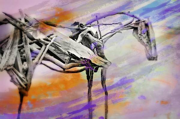 Wall Art - Photograph - High Horse by Diana Angstadt