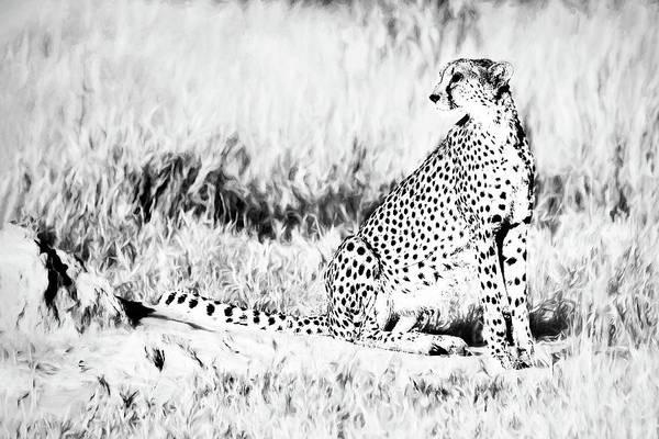Photograph - High Key Cheetah by Kay Brewer