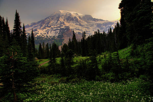 Wall Art - Photograph - High Meadow And Mt Rainier by Bob Pool