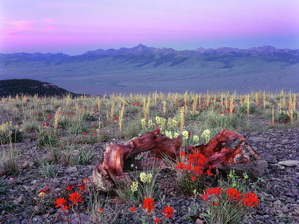 Desert Flower Photograph - High Mountain Sunrise by Leland D Howard