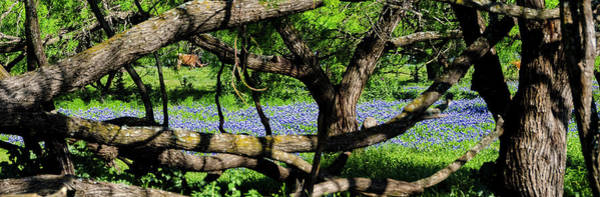 Photograph - Highland Hills Bluebonnets by Greg Reed