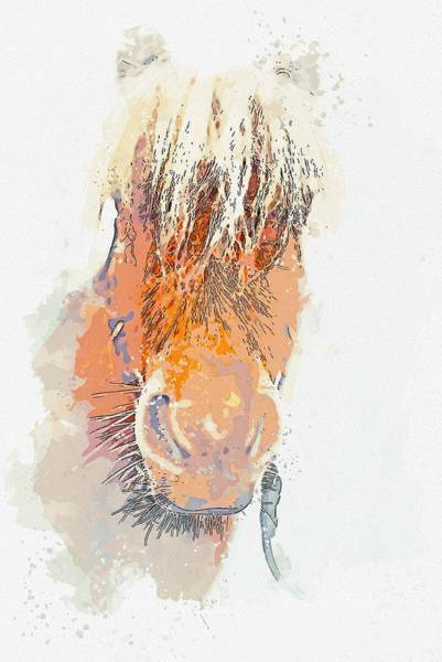 Painting - Highland Horse Head -  Watercolor By Adam Asar by Adam Asar