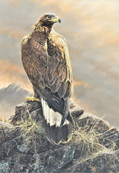 Painting - Highlander - Golden Eagle by Alan M Hunt