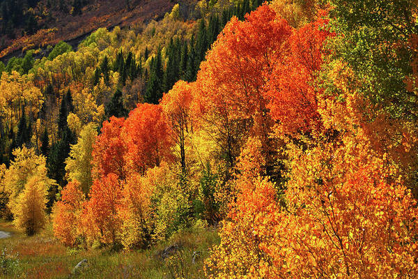 Photograph - Highway 133 Fall Colors Near Mcclure Pass by Ray Mathis