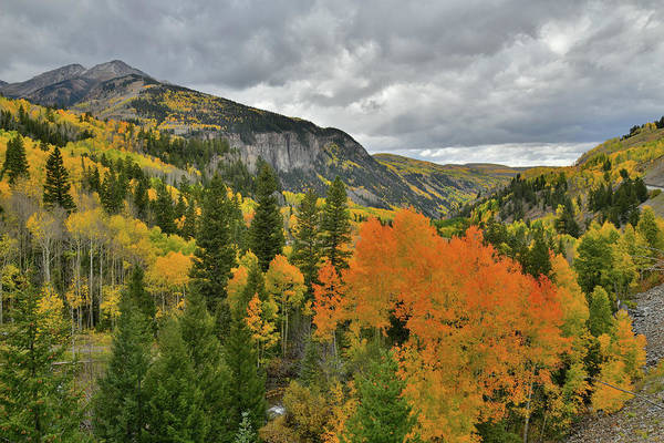 Photograph - Highway 145 Fall Colors Near Ophir Road In Co by Ray Mathis