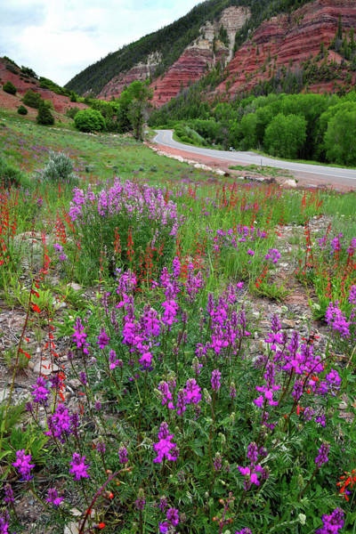Photograph - Highway 145 Wildflower Garden by Ray Mathis
