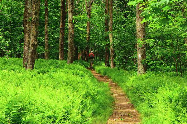 Photograph - Hiker Ferns Along The Shenandoah At by Raymond Salani III