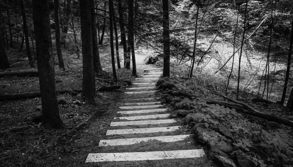Photograph - Hiking Stairs Black And White by Dan Sproul