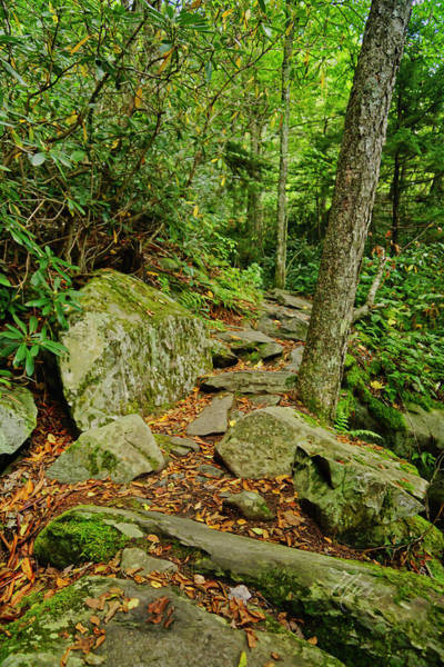 Photograph - Hiking Trail by Meta Gatschenberger