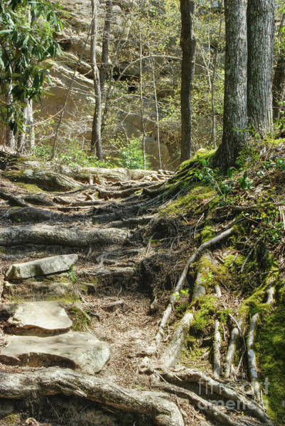 Photograph - Hiking Trail by Phil Perkins