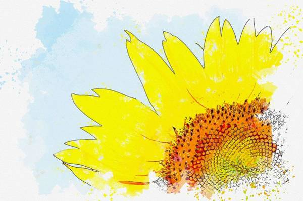 Painting - Hilarity Life Summer Sunshine Sunflower -  Watercolor By Ahmet Asar by Ahmet Asar