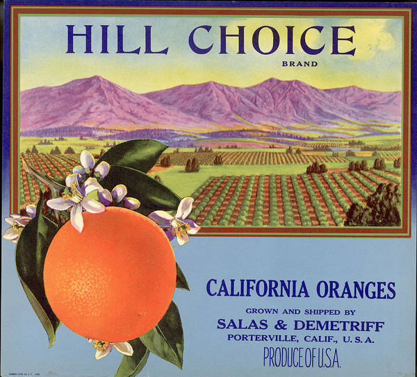 Technique Photograph - Hill Choice Brand Fruit Box Label by Hulton Archive