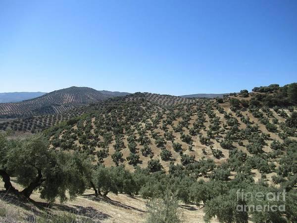 Photograph - Hills Near Iznajar by Chani Demuijlder