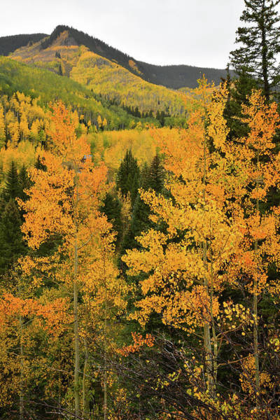 Photograph - Hills Of Fall Color In Aspen by Ray Mathis