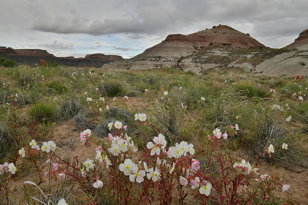 Photograph - Hills Of Wildflowers In Grand Junction by Ray Mathis