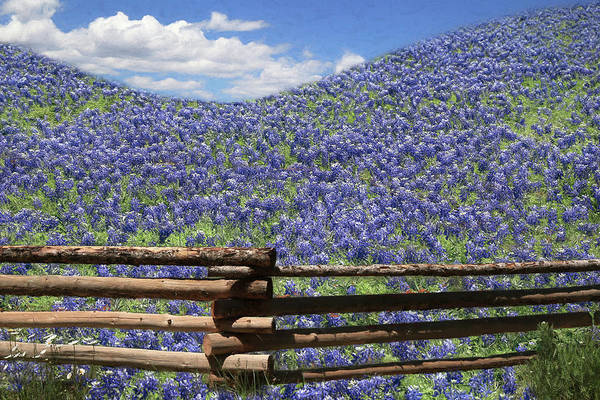 Wall Art - Photograph - Hillside Bluebonnets by Donna Kennedy