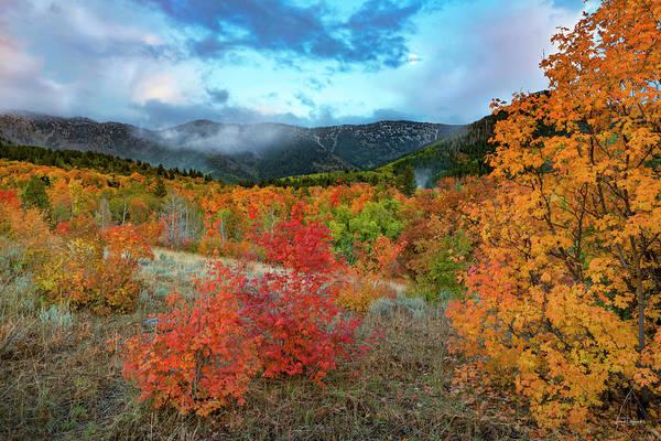 Photograph - Hillside Glow by Leland D Howard