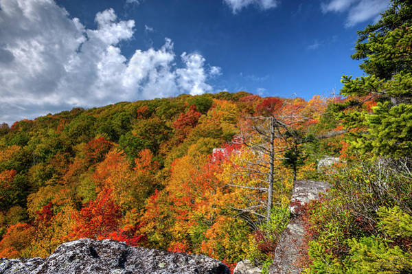 Photograph - Hillside Of Color by Dan Friend