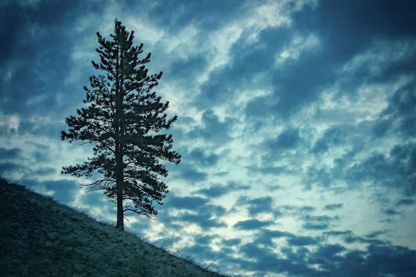 Photograph - Hillside Tree by Todd Klassy