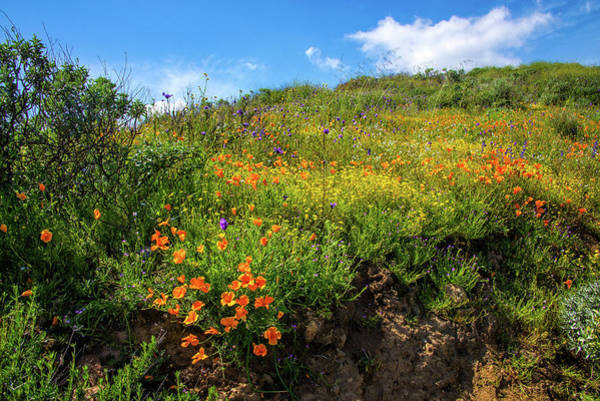 Photograph - Beautiful Hillside Wildflowers At Diamond Valley Lake  by Lynn Bauer