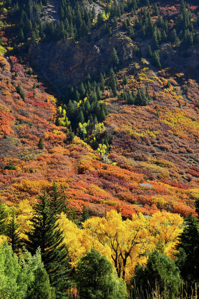 Photograph - Hillsides Of Fall Color Near Redstone, Colorado by Ray Mathis